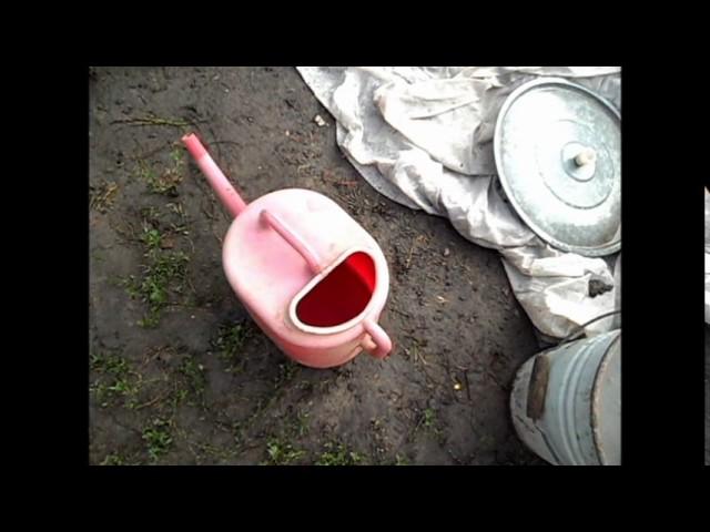 Посадка репы семенами в открытый грунт и уход за ней